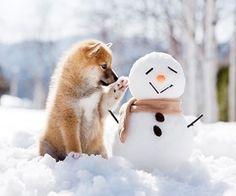Okres zimowy dla Naszych czworonogó...